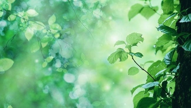 spring-leaves-wallpaper-collection-19