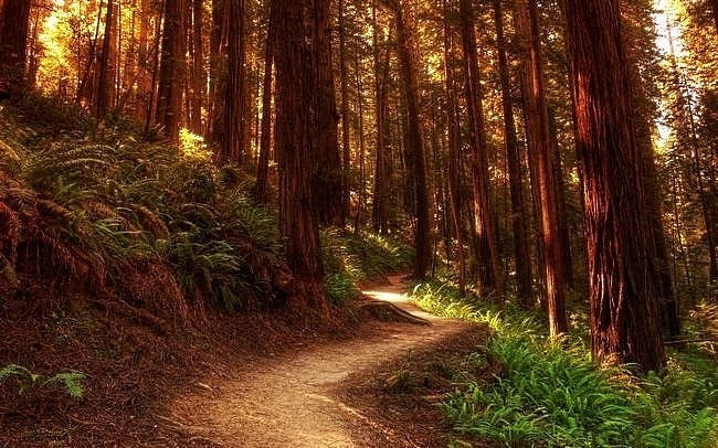 wilderness-pathways-wallpaper-collection-09