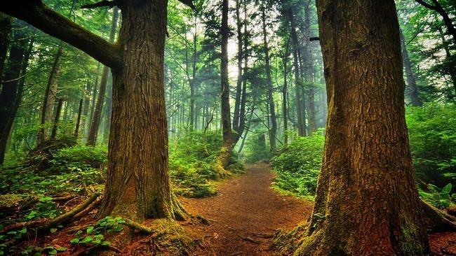 wilderness-pathways-wallpaper-collection-05