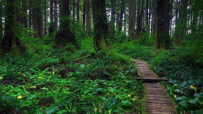 wilderness-pathways-wallpaper-collection-06