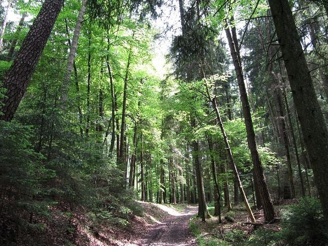 wilderness-pathways-wallpaper-collection-07