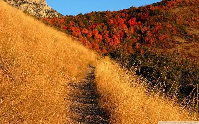 wilderness-pathways-wallpaper-collection-12