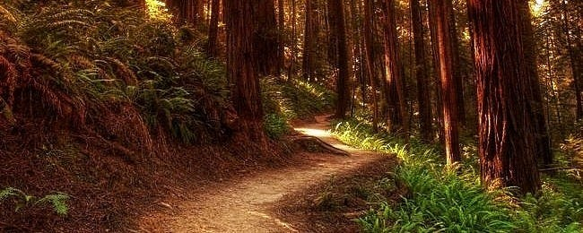 wilderness-pathways-wallpaper-collection-00