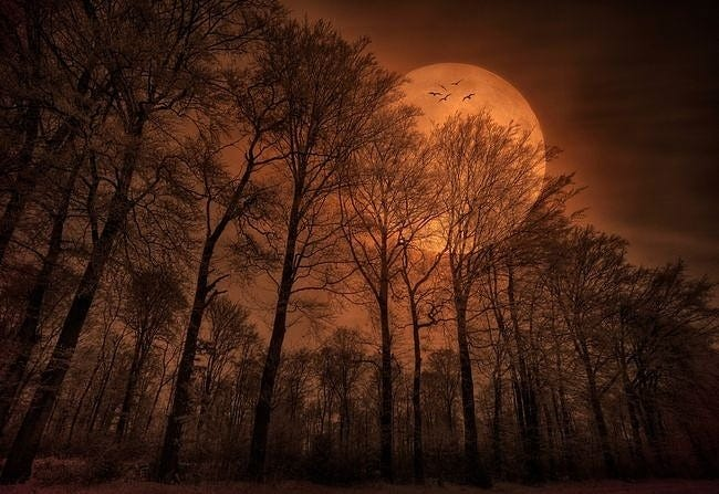 moonlit-nights-wallpaper-collection-series-two-15