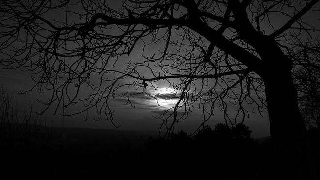 moonlit-nights-wallpaper-collection-series-two-13