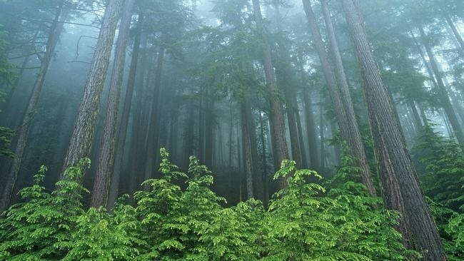 forests-wallpaper-collection-series-two-04