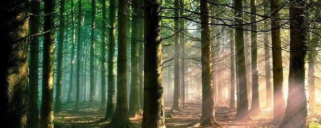 forests-wallpaper-collection-series-two-00
