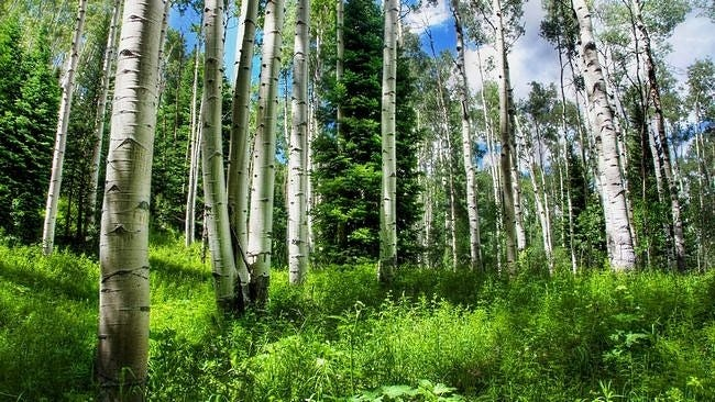 forests-wallpaper-collection-series-two-02