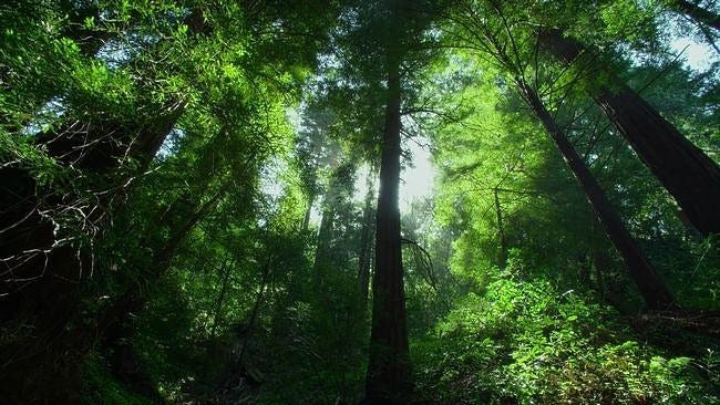 forests-wallpaper-collection-series-two-05