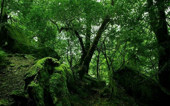 forests-wallpaper-collection-series-two-06