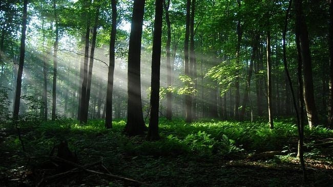 forests-wallpaper-collection-series-two-07