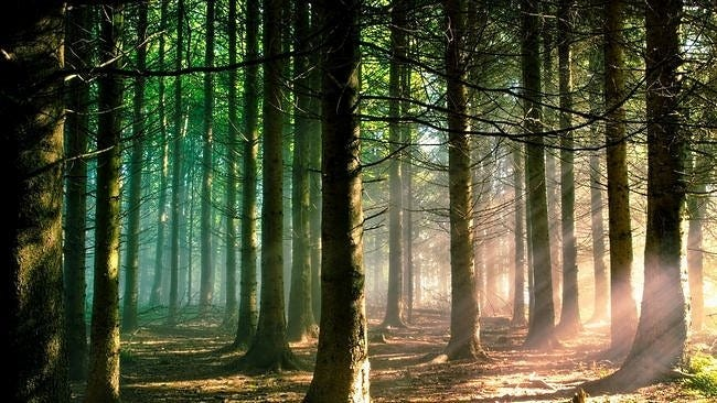 forests-wallpaper-collection-series-two-08