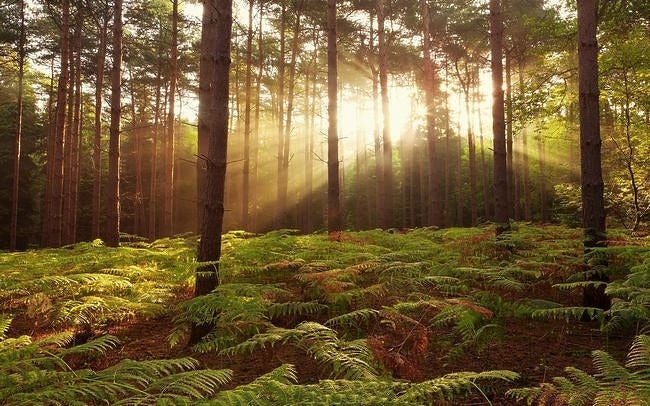 forests-wallpaper-collection-series-two-10