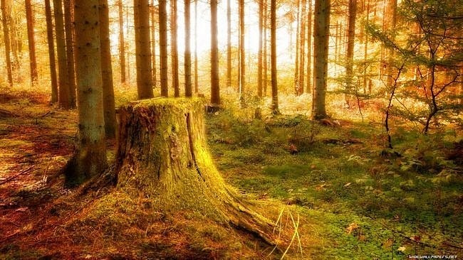 forests-wallpaper-collection-series-two-11