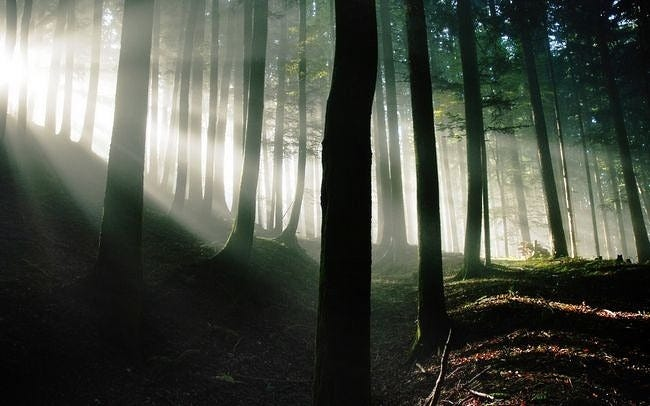 forests-wallpaper-collection-series-two-12