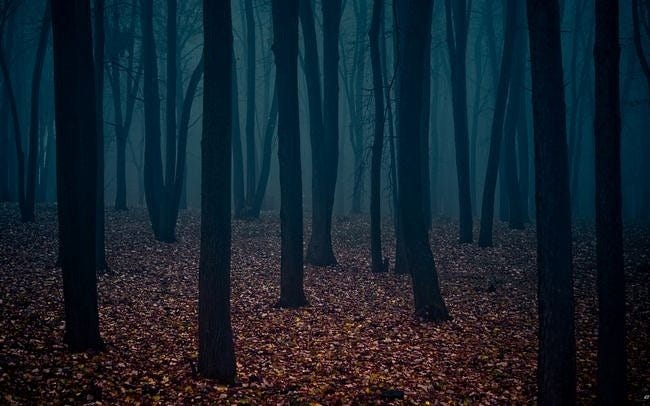 forests-wallpaper-collection-series-two-13