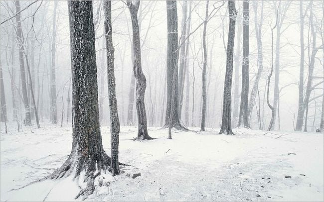 forests-wallpaper-collection-series-two-14