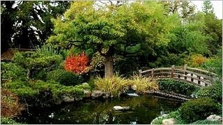 gardens-wallpaper-collection-series-two-15