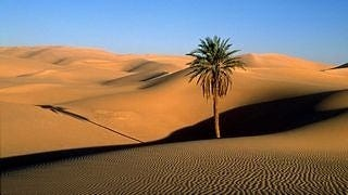 desert-areas-wallpaper-collection-series-two-04
