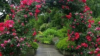 gardens-wallpaper-collection-series-two-03