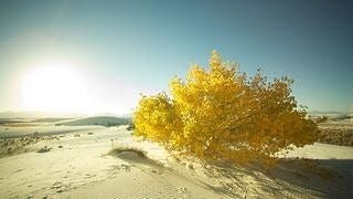 desert-areas-wallpaper-collection-series-two-02