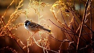 feathered-friends-wallpaper-collection-series-two-11