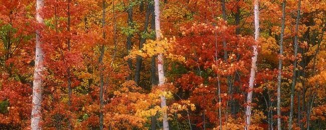 autumn-2012-wallpaper-collection-00