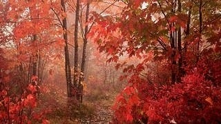 autumn-2012-wallpaper-collection-01