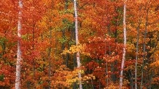 autumn-2012-wallpaper-collection-02