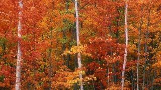 autumn-2012-wallpaper-collection-02