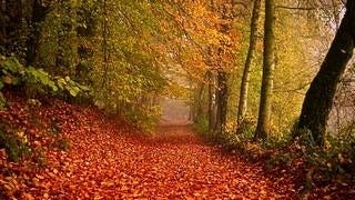 autumn-2012-wallpaper-collection-03
