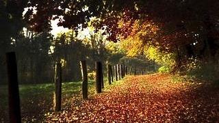 autumn-2012-wallpaper-collection-04