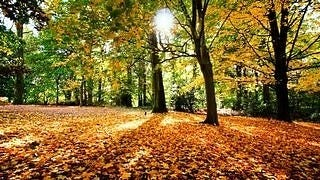 autumn-2012-wallpaper-collection-05