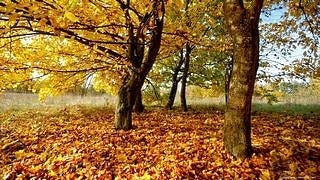 autumn-2012-wallpaper-collection-06
