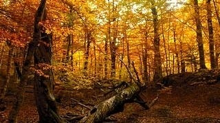 autumn-2012-wallpaper-collection-07