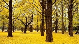 autumn-2012-wallpaper-collection-09