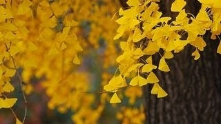 autumn-2012-wallpaper-collection-11