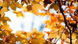 autumn-2012-wallpaper-collection-12