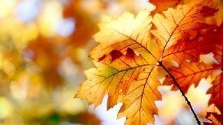 autumn-2012-wallpaper-collection-13