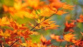 autumn-2012-wallpaper-collection-14