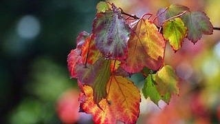 autumn-2012-wallpaper-collection-15