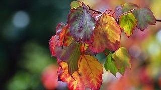 autumn-2012-wallpaper-collection-15