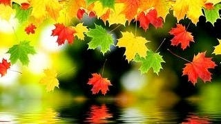 autumn-2012-wallpaper-collection-16