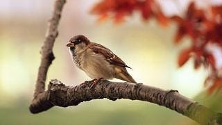 feathered-friends-wallpaper-collection-series-two-10