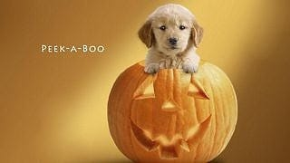halloween-2012-wallpaper-collection-bonus-edition-03