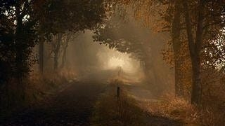 foggy-mornings-wallpaper-collection-series-two-08