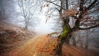 foggy-mornings-wallpaper-collection-series-two-09