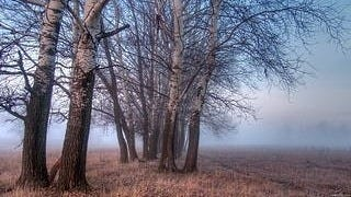 foggy-mornings-wallpaper-collection-series-two-10