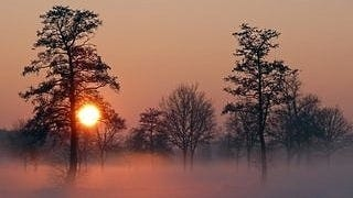 foggy-mornings-wallpaper-collection-series-two-12