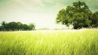 grasslands-wallpaper-collection-series-two-09